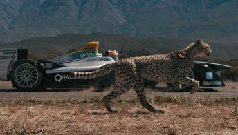 La Formula E sfida il ghepardo